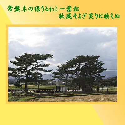 ichiyouumatu321.jpg