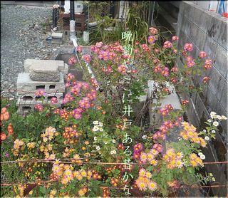 idobanngiku111.jpg
