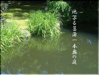 ikeayame111111.jpg