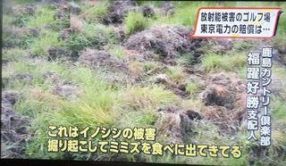 inoshishi111.jpg