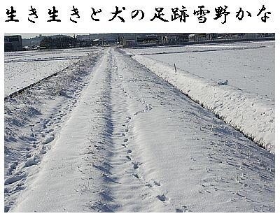 inuashi1.jpg