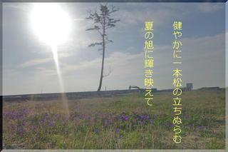 ipponmat122.jpg
