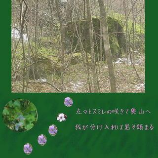 iwasumire1212.jpg