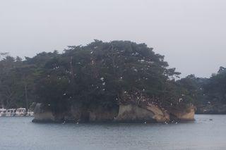 kamomeeeeeeialand1.jpg
