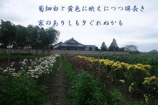 kikuheiii123.jpg