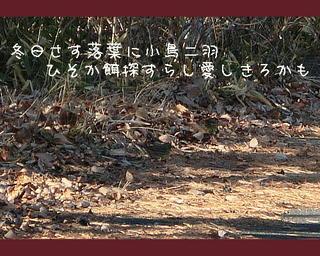 kotoriochiba111.jpg