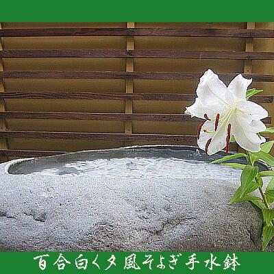 lily11.jpg