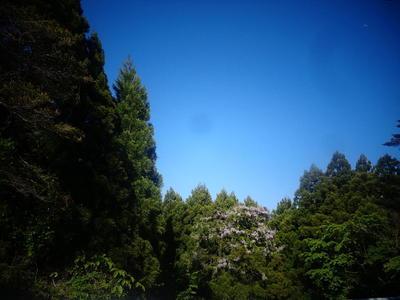 marufujinohanamori4-4.jpg