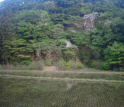 marumofujita12.jpg