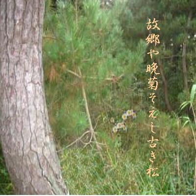 matumigita1.jpg