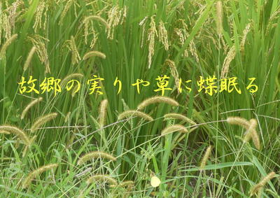minorihome111.jpg