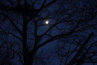 moontreee111.jpg