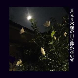 mukugeeee111.jpg