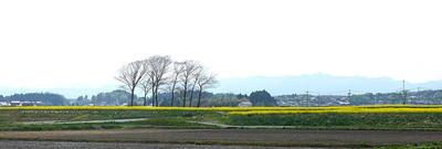 nanohanakayahama1.jpg