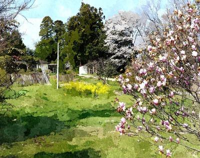 nanohanasakura1_FotoSketcher2.jpg