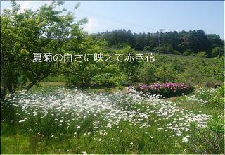 natukiku12345.jpg