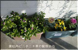 nichinichi111.jpg
