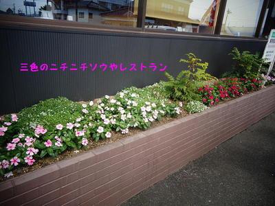 nichinichi12.jpg