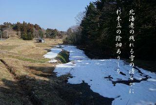 nokoruyukiii11.jpg
