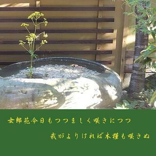ominaeshiiii1111.jpg