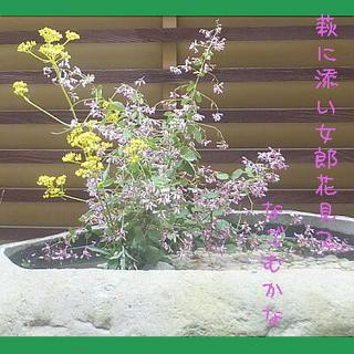 ominawsjiii123.jpg