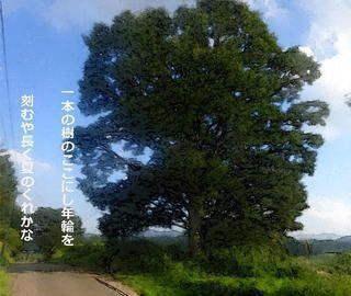 onetree1.jpg