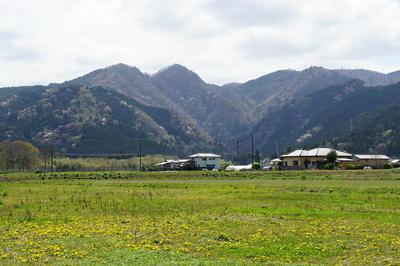 ooharasakura1.jpg