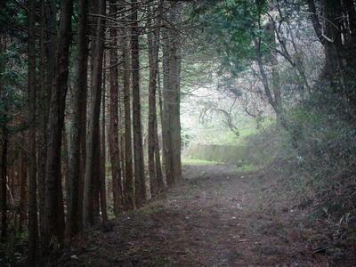 oyamaway222.jpg