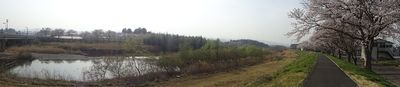 panoramasakura111.jpg