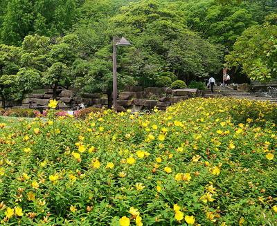 parkflower555.jpg
