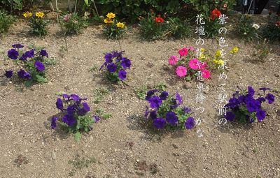 perpleflowers1.jpg