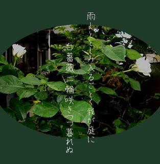 rainrose111.jpg