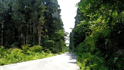 roadforest1_FotoSketcher.jpg