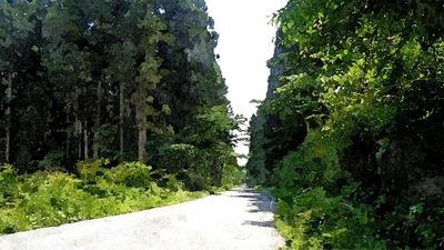 roadforest1_FotoSketcher.jpg