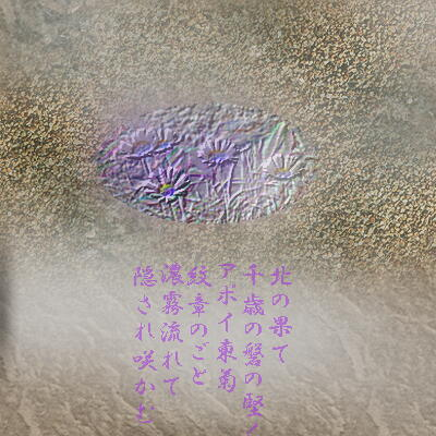 rockyazumakiku1.jpg