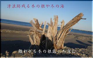 rootsssss111.jpg
