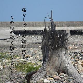 roottreee1111.jpg