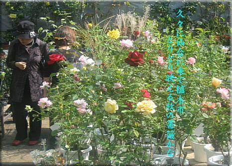 rosedendai1.JPG