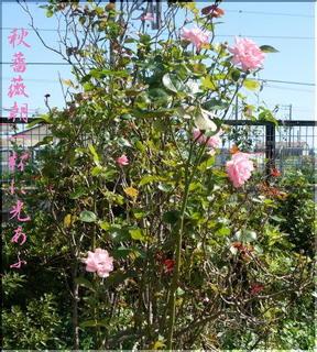roseeee123.jpg