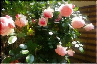 roseeeeee111_FotoSketcher111.jpg