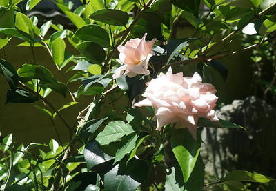 rosegarden222.jpg