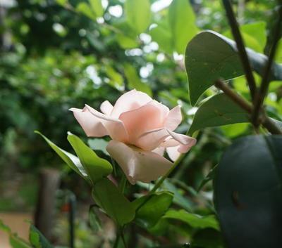 rosegarden22222.jpg