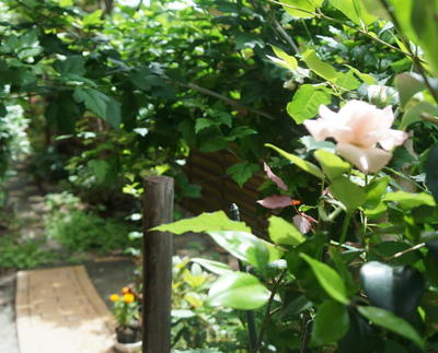rosegarden333333.jpg