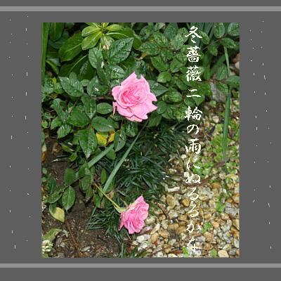 rosehaikurain121.jpg