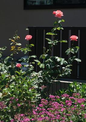 rosehouse888.jpg