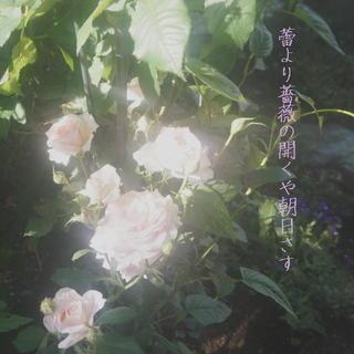 roselastpp1.jpg