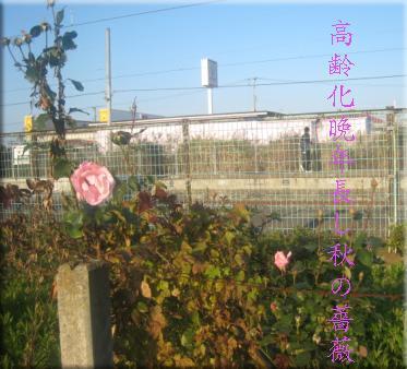 roselateage.JPG