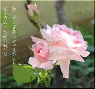 roselight1.jpg