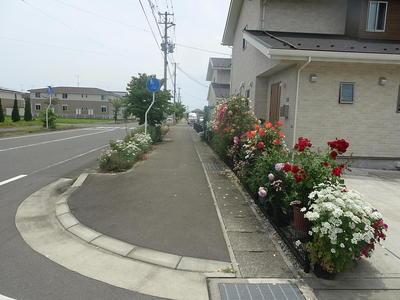 roseroad111.jpg