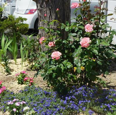 rosestation77.jpg